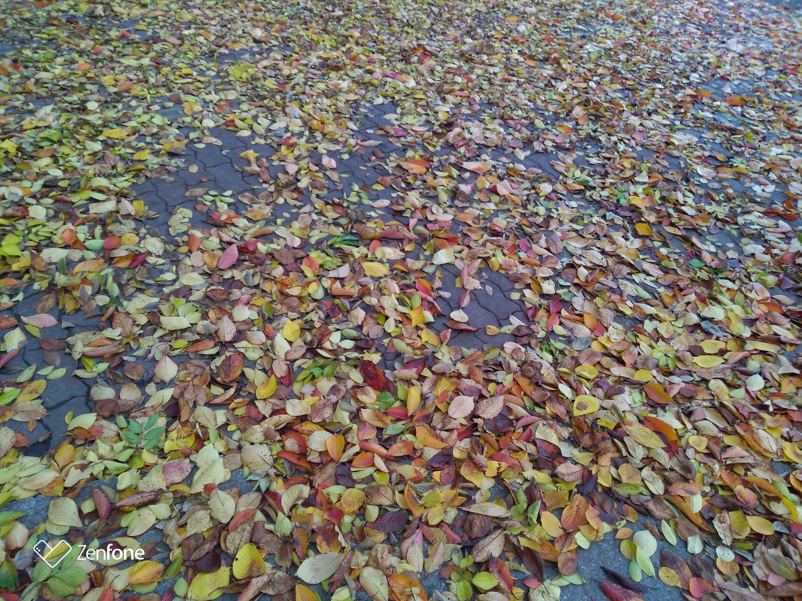 秋のカーペット